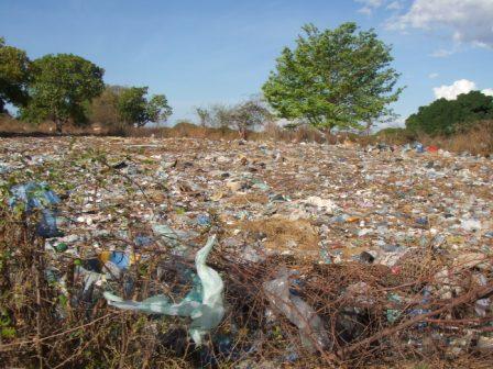 Voici l'état surprenant du compost constitué des déchets des marchés de la ville